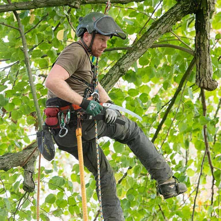 Baumpflege für gesunde und stabile Bäume