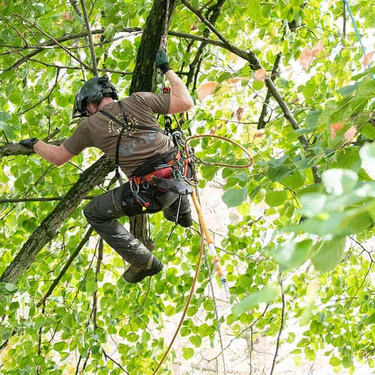 Professioneller Baumschutz auch in den Bäumen