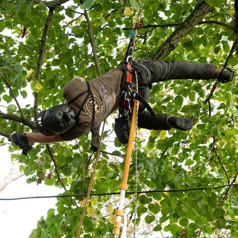 Fachgerechter Baumschnitt vom Baumpflege-Profi